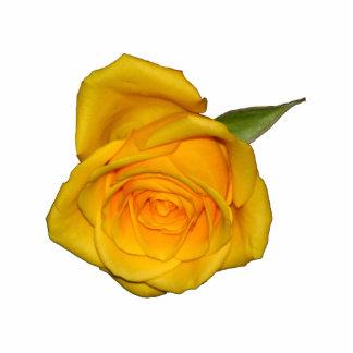 Yellow Rosebud Photo Cutouts