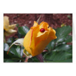 Yellow rosebud with ladybug greeting card