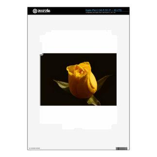 Yellow Roses 11 iPad 3 Skin