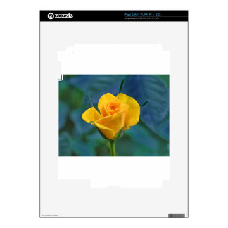 Yellow Roses 12 Decals For The iPad 2