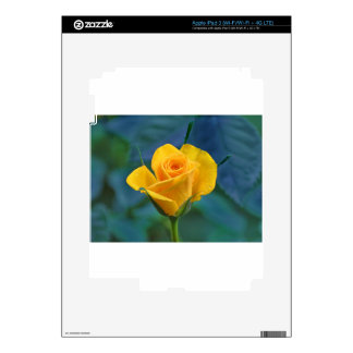 Yellow Roses 12 Skins For iPad 3