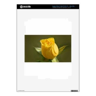 Yellow Roses 14 iPad 3 Skin