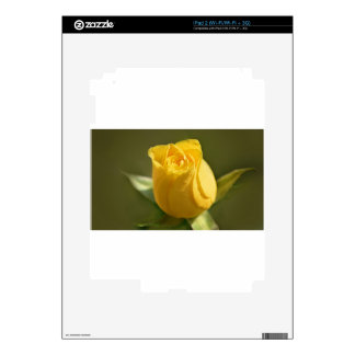 Yellow Roses 14 Skins For The iPad 2