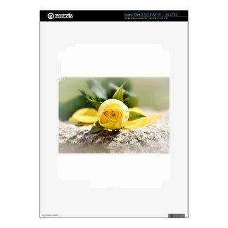Yellow Roses 15 iPad 3 Skin