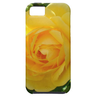 Yellow Roses 3 iPhone SE/5/5s Case