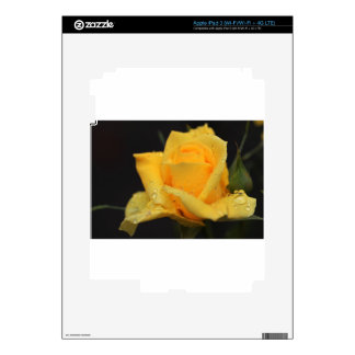 Yellow Roses 6 Decal For iPad 3