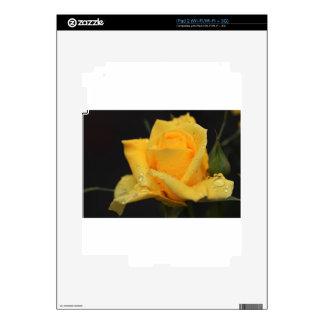Yellow Roses 6 iPad 2 Decal