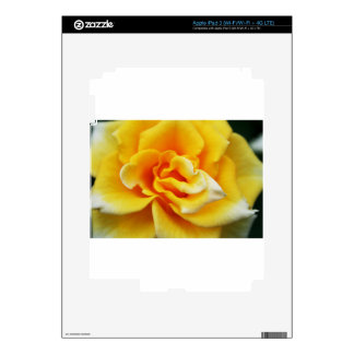 Yellow Roses 8 Skin For iPad 3