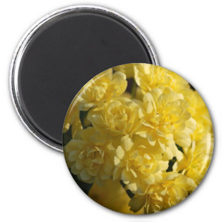 Yellow roses and meaning magnet
