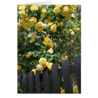 Yellow Roses (Blank Card) Card