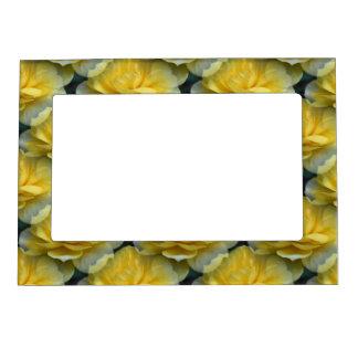 Yellow Roses Flower Magnetic Frame