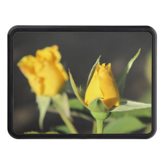 Yellow Roses Hitch Cover