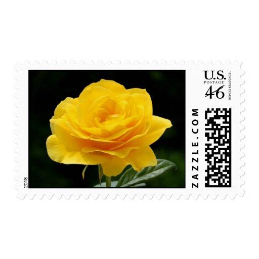 Yellow roses stamp