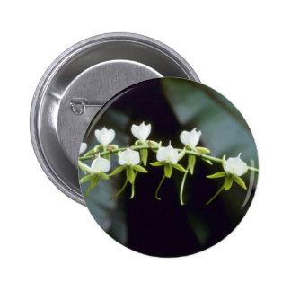 Yellow Rothschildiana (Vanda) flowers Buttons