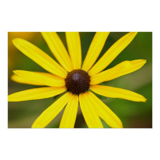 Yellow Rudbeckia Flower Poster