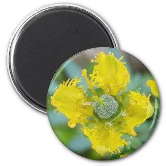 Yellow rue flower magnet