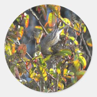 Yellow Rumped Warbler 11 Classic Round Sticker