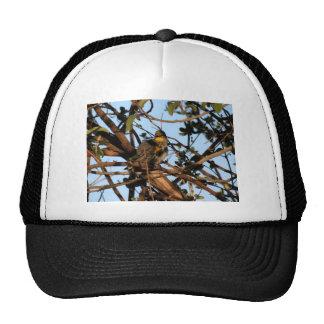 Yellow Rumped Warbler 1 Mesh Hats