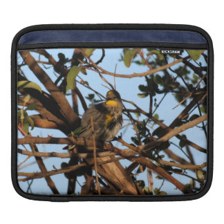Yellow Rumped Warbler 1 Sleeve For iPads