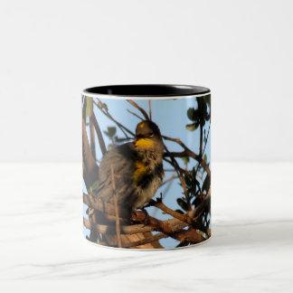 Yellow Rumped Warbler 1 Mugs