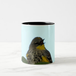 Yellow Rumped Warbler 2
