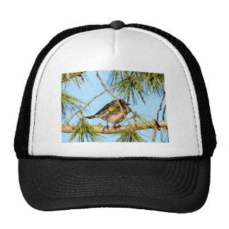 Yellow Rumped Warbler 3 Mesh Hats