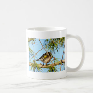 Yellow Rumped Warbler 3