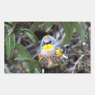 Yellow Rumped Warbler 6 Rectangular Sticker