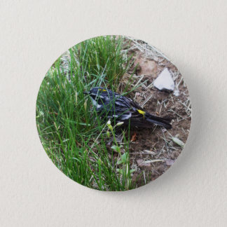 Yellow-Rumped Warbler Button