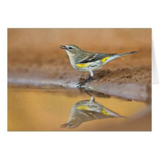 Yellow-Rumped Warbler (Dendroica Coronata) Card