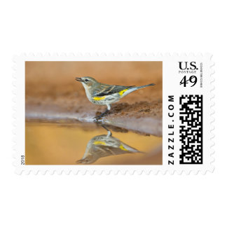Yellow-Rumped Warbler (Dendroica Coronata) Postage