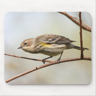 Yellow-rumped Warbler Mouse Pad