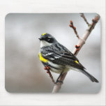 Yellow-Rumped Warbler Mousepads