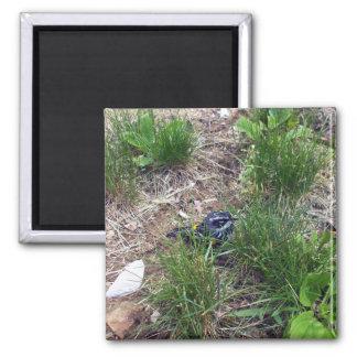Yellow-Rumped Warbler-Myrtle Warbler Magnet