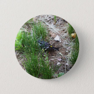Yellow-Rumped Warbler-Myrtle Warbler Pinback Button