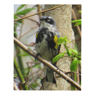 Yellow-rumped Warbler Panel Wall Art