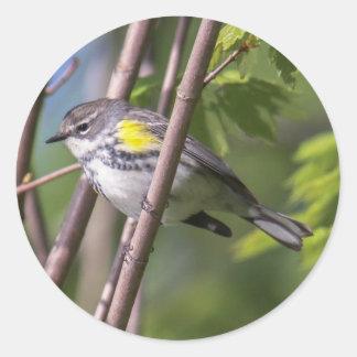 Yellow-rumped Warbler Classic Round Sticker
