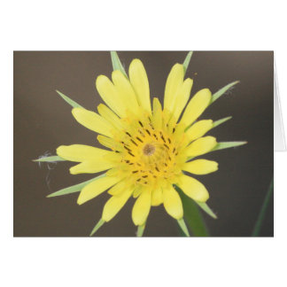 Yellow Salsify Card