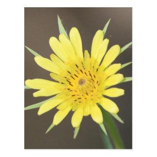 Yellow Salsify Postcard