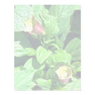 yellow Scopolia Carnioli flowers Custom Letterhead