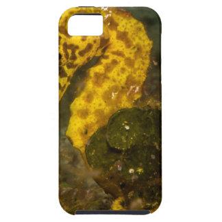 Yellow Seahorse iPhone SE/5/5s Case