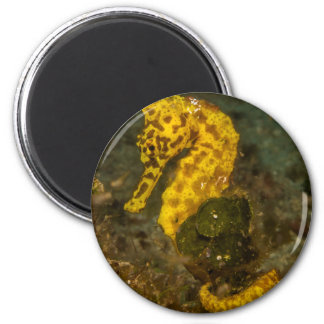 Yellow Seahorse Magnet