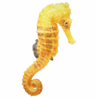 Yellow Seahorse Magnet Photo Cutout