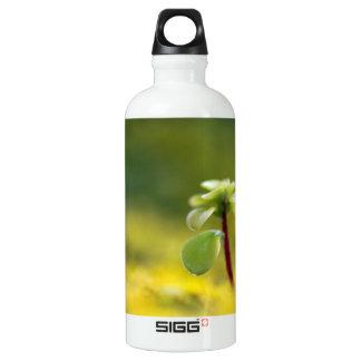 Yellow Sedum Aluminum Water Bottle
