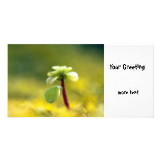 Yellow Sedum Card