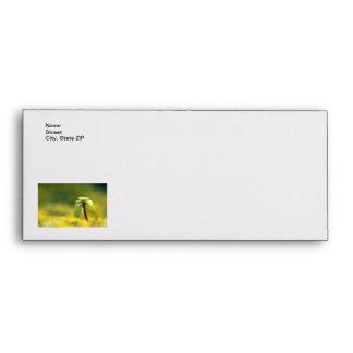 Yellow Sedum Envelope
