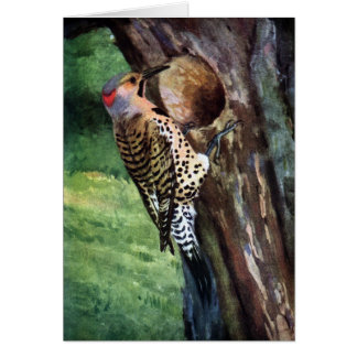 Yellow-shafted Flicker and Tree Cavity Card