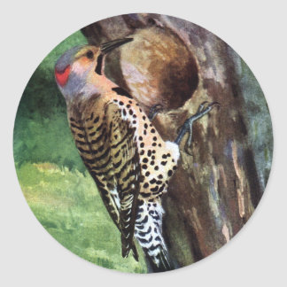 Yellow-shafted Flicker and Tree Cavity Classic Round Sticker