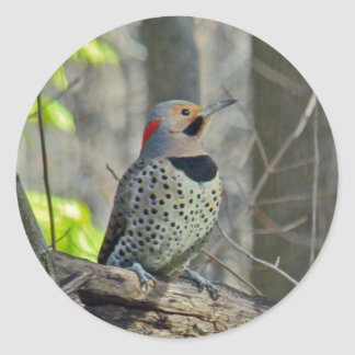 Yellow-Shafted Flicker Coordinating Items Classic Round Sticker