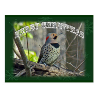 Yellow-Shafted Flicker Merry Christmas Items Post Cards